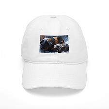 Tortoishell Cavy Baseball Cap