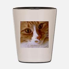Cute Cat Face Shot Glass