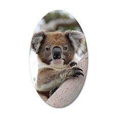 Precious Baby Koala in Eucal Wall Decal
