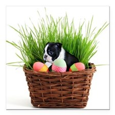 "Easter Boston Terrier Dog Square Car Magnet 3"" x 3"