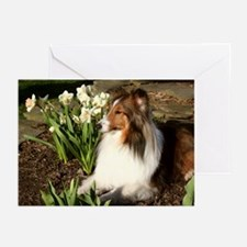 Sheltie Spring Note Cards (Pk of 10)