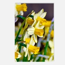 Yellow Daffodils Postcards (Package of 8)