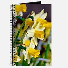 Yellow Daffodils Journal