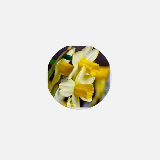 Yellow Daffodils Mini Button