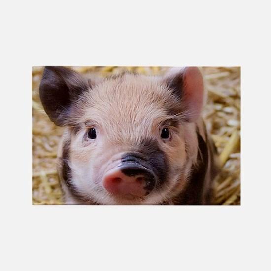 sweet little piglet 2 Magnets