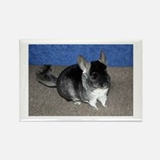 Chinchilla Rectangle Magnet Magnets