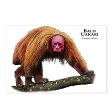 Bald Uakari Postcards (Package of 8)