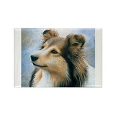 Dog 122 Sheltie Collie s Magnets