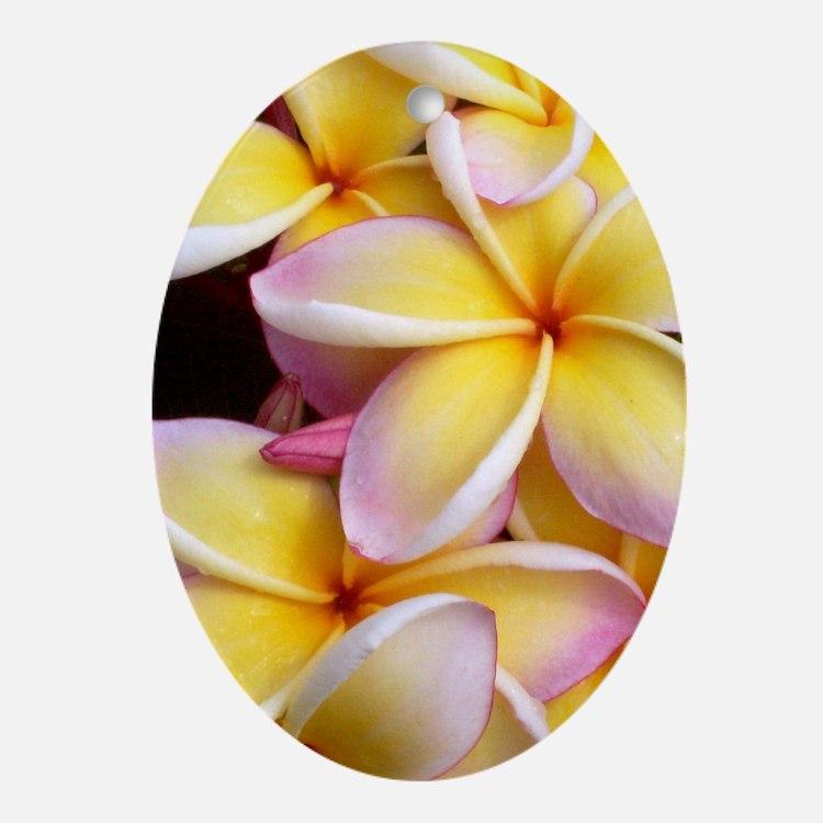 Hawaiian Plumeria Oval Ornament