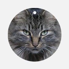 Main Coon Kitty Cat Round Ornament