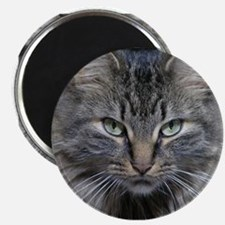 Main Coon Kitty Cat Magnet
