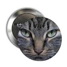 """Main Coon Kitty Cat 2.25"""" Button"""