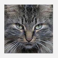 Main Coon Kitty Cat Tile Coaster