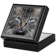 Main Coon Kitty Cat Keepsake Box