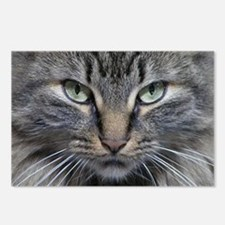 Main Coon Kitty Cat Postcards (Package of 8)