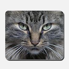 Main Coon Kitty Cat Mousepad