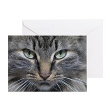 Main Coon Kitty Cat Greeting Card