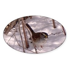 Sparrow in the Snow Decal
