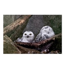 Two Owls Postcards (Package of 8)