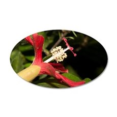 Clay's Hibiscus (Hibiscus cl Wall Decal