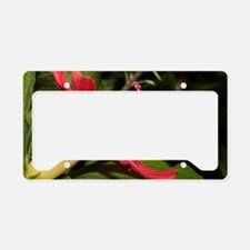 Clay's Hibiscus (Hibiscus cla License Plate Holder