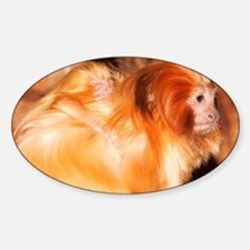 Golden Lion Tamarin mother with bab Sticker (Oval)