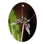 Fetid Adders Tongue Flower Ornament (oval)