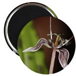 Fetid Adders Tongue Flower Magnets