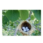 Bird's Nest Postcards (Package of 8)