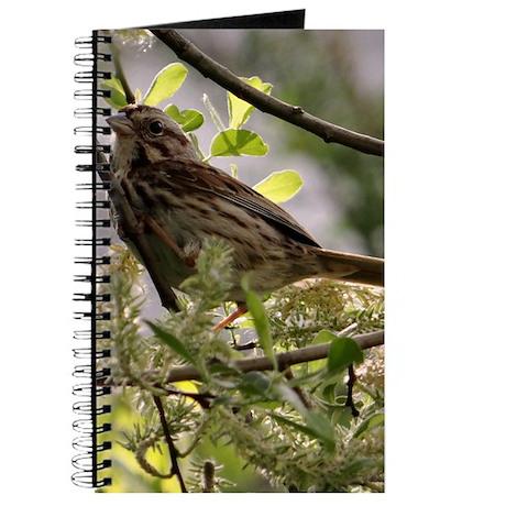 Sparrow in the Sun Journal