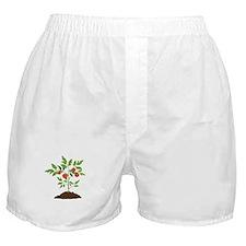 Tomato Plant Boxer Shorts
