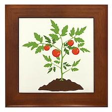 Tomato Plant Framed Tile