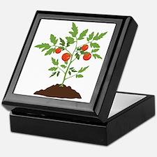Tomato Plant Keepsake Box