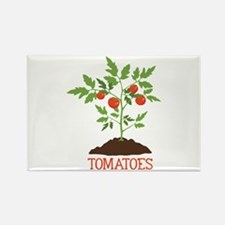 TOMATOES Magnets