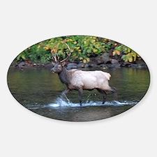 Bull Elk in river Decal