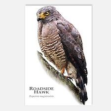 Roadside Hawk Postcards (Package of 8)