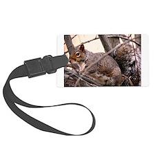 Fluffy Squirrel Luggage Tag