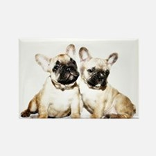 French Bulldogs Magnets