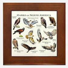 Hawks of North America Framed Tile