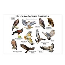 Hawks of North America Postcards (Package of 8)