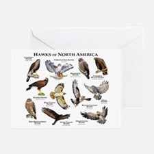 Hawks of North America Greeting Cards (Pk of 20)