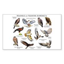 Hawks of North America Decal