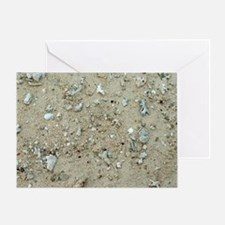 Broken weathered coral on the beach Greeting Card
