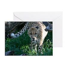 Hunting Prowling Cheetah at the Zoo Greeting Card
