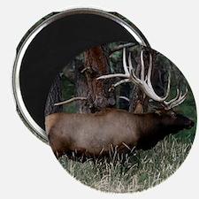 Wild Elk with Huge Antlers Magnet