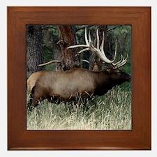 Wild Elk with Huge Antlers Framed Tile
