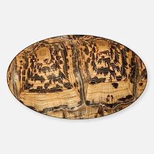 Leopard tortoise (Stigmochelys pard Sticker (Oval)