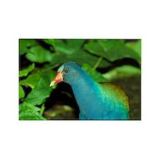 American Purple Gallinule (Porphy Rectangle Magnet