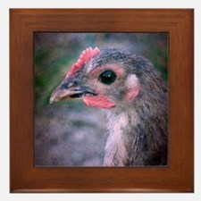 A Young Chicken Framed Tile