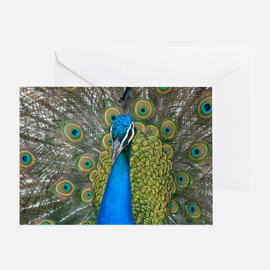 Colorfeal Peacock Head and Tail Feat Greeting Card
